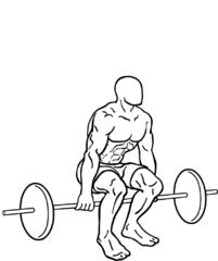 Squats Barbell